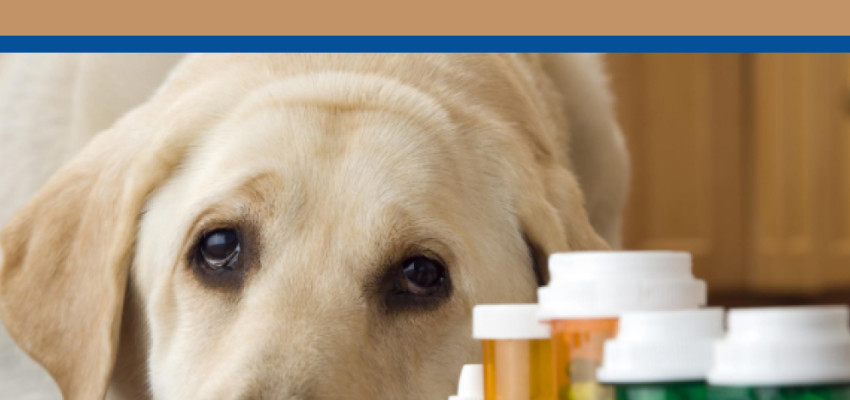 Medicating Dogs with Arthritis: Eastern and Western Perspectives1 min read